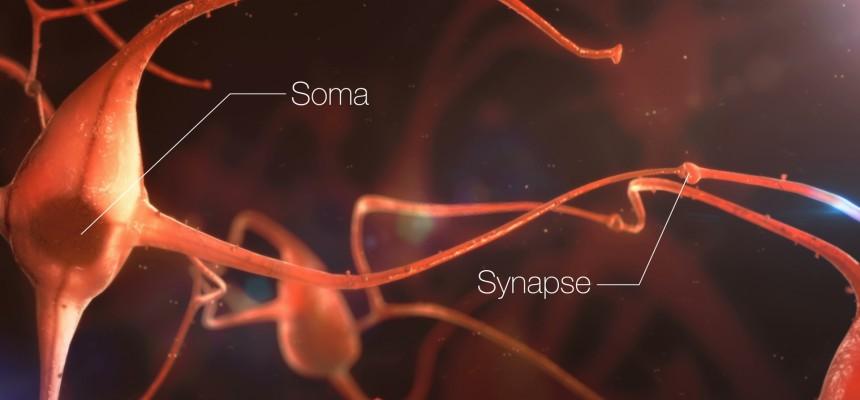 Alzheimer : nouveau regard sur les protéines grâce à la vision en 3D des synapses