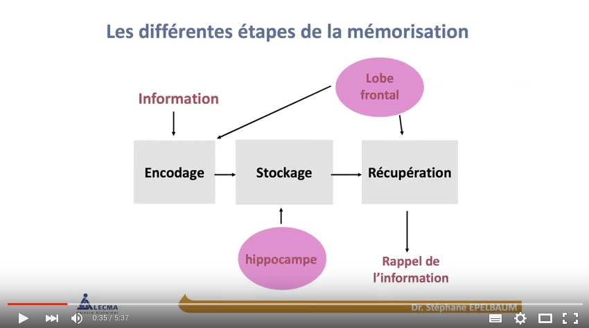 Comment fonctionne la mémoire par LECMA-Vaincre Alzheimer
