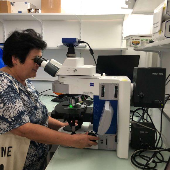 Observation au microscope