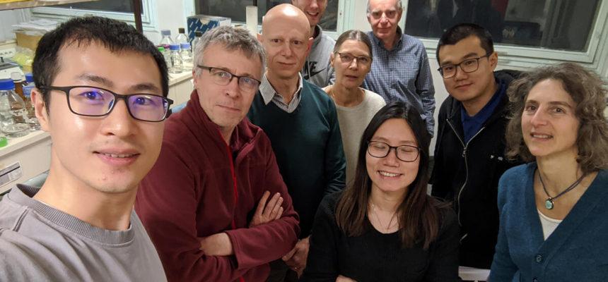 Les aptamères : les modifier et les améliorer pour développer un nouveau traitement novateur ?