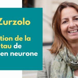 La propagation de la protéine tau dans le cerveau malade d'Alzheimer